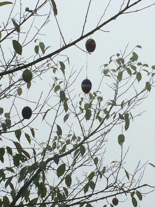 The egg shells hanging from the Cherry Tree at Hot Stimulating Cafe